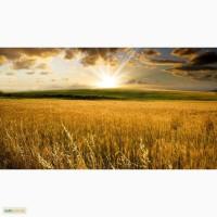 Пшеница 2-6 класс.Запорожская, Херсонс кая области