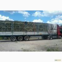 Луговое сено, люцерна с доставкой по Украине