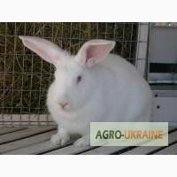 Комбикорм для кроликов на откорме РОСТ К92-2 от 35 дней и до забоя