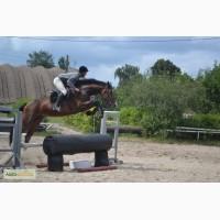 Продажа молодых спортивных лошадей до 7 лет
