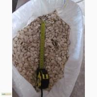 Продам семечки тыквы сероволжская