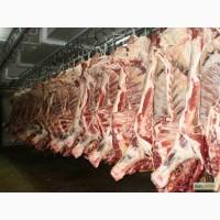 Продам: мясо говядины халяль
