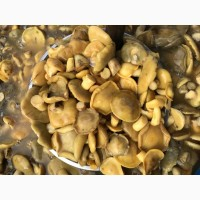 Продам разносортные грибы