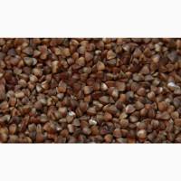 Семена Гречихи Арно (Канада) 1–й репродукции. Ультраранняя до 70 дней