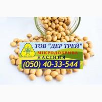 Семена сои, соя посевная, посевной материал сои. Соя