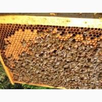 Продам Бджолопакети порода Українська степова