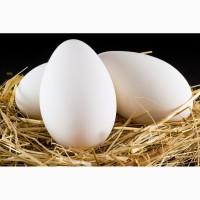 Яйця гусячі