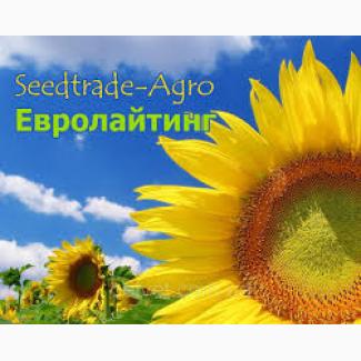 Продам посівний соняшник НС Х 7634