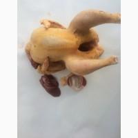 Курка свійська якісне куряче м#039;ясо