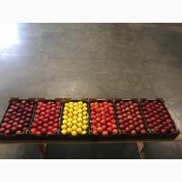 Продаємо свіжі яблука урожай 2018