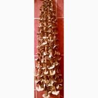 Сушеные грибы отличного качества для ресторанов и оптовиков