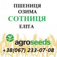 Пшеница озимая Сотница элита от производителя - Agrotrade / Agroseeds