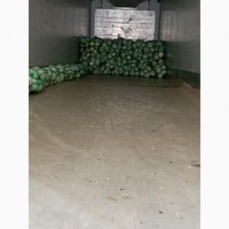Продам капусту Сорт Золтон