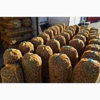 Продам грецкие орехи 2019 года