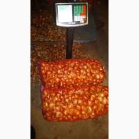 Продам лук сорт штутгард 12 тонн