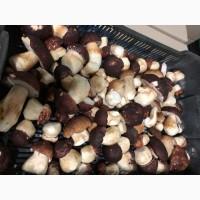 Продам гриб білий 2020 рік