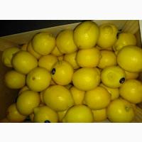Продам лимон разных сортов