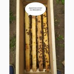 Бджолосім#039;ї та бджолопакети здоставкою