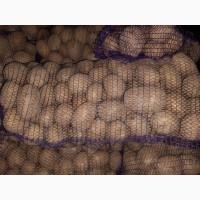 Продам картофель в Каменском