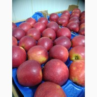 Яблука Джонапринц