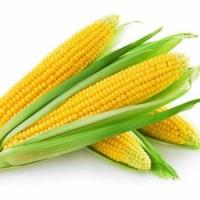 Продам кукурудзу. 1000 тонн. ціна договірна. Луцьк. Турійськ
