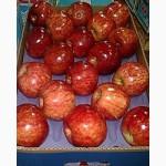 Предлагаю прямые поставки груши, яблоки из Аргентины