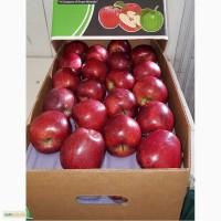 Предлагаю прямые поставки груши, яблоки из Аргентины, Чили
