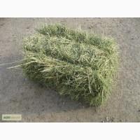 Сено люцерка для корма с доставкой в Запорожье