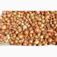 Продам лук на перо, лук-севок разные фракции