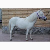 Продам Шетлендского пони