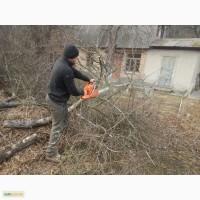 Расчистка участка Киевская область