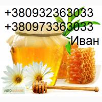 Куплю мед та пилок оптом, ДОРОГО, по всій Україні