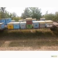 Продам пчелоплатформу
