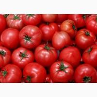 Продам томаты из Марокко