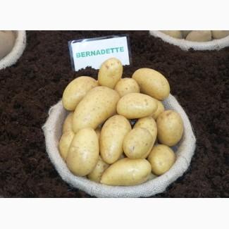 Продам семенной картофель третьей репродукции 3, 10 грн