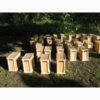 Пчелопакеты Карпатка 4 рамки 3+1.Самовывоз с питомника