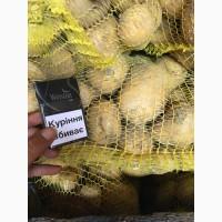 100% Качественный молодой картофель Оптом