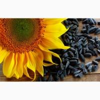 Закупка зерновых культур, подсолнечника, сои по Украине
