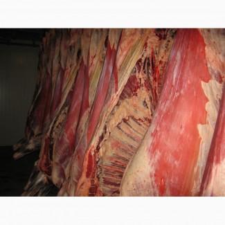 Продам в ассортименте говяжьи субпродукты и блочное мясо