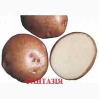 Продам разные сорта элит картофеля