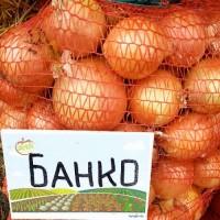 Лук Банко, цена 5 грн. коль-во 43 тонн качество гарантируем