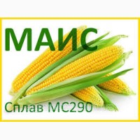Семена кукурузы Сплав МС 290 (ФАО 290) Маис
