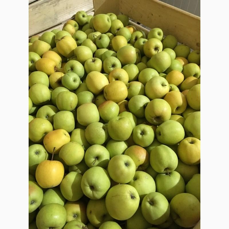 Продам яблука від виробника, Львовская обл.
