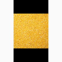 Купим Просо желтое на Экспорт