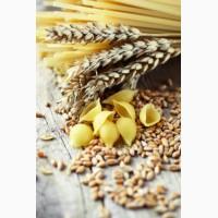 Насіння Канадської пшениці, семена пшеницы озимой морозоустойчивый сорт