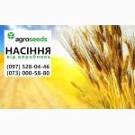 Продаем семена. Озимая пшеница Кубус (КВС), 1 репродукция, урожай 2019 с документами