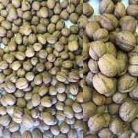 Продам на экспорт грецкий орех калибр 28 плюс. Выход ядра до 40%