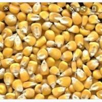 Куплю кукурудзу від 3 т до 30 т