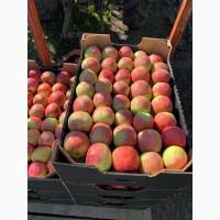 Продам сливу також яблука