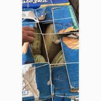 Продам дыню на переработку / корм животным